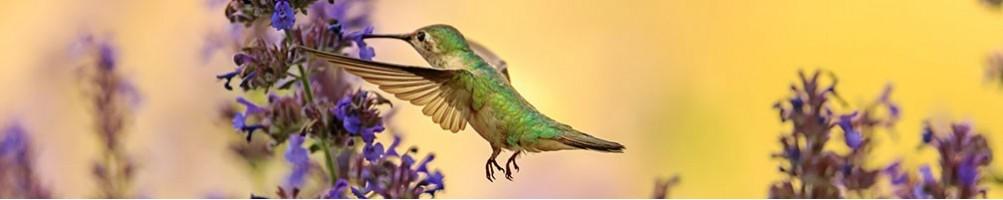 Alimentazione per uccelli - Villaggio Natura