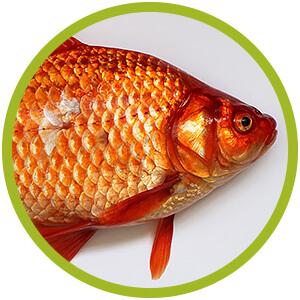prodotti per pesci