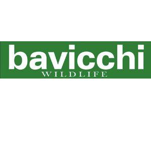 Bavicchi